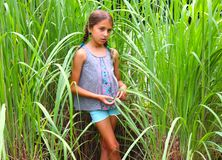 Tween Obliges for a Pose in Tall Grass royalty free stock photography