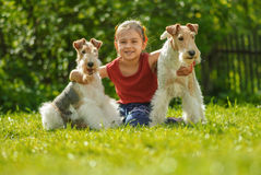 Young Girl and two fox terriers Royalty Free Stock Photos