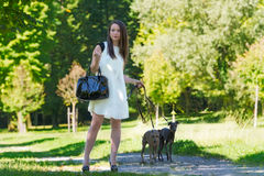 Young girl  with two greyhounds in the park Stock Photo