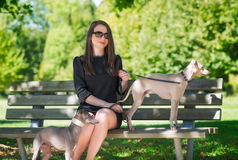 Young girl  with two greyhounds in the park Stock Images