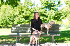 Young girl  with two greyhounds in the park Royalty Free Stock Photography