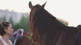 Young girl and two horses. Girl with horses on the field. A girl and two horses outside the city. Woman stroking a beautiful horse stock footage