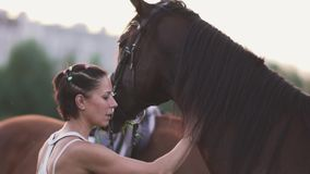 Young girl and two horses. Girl with horses on the field. A girl and two horses outside the city. Woman stroking a beautiful horse stock video footage