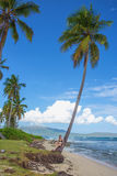Young girl under palm tree. Young girl sitting under the high palm tree. Tropical landscape, caribbean view Stock Images