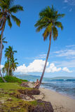 Young girl under palm tree. Young girl sitting under the high palm tree. Tropical landscape, caribbean view Royalty Free Stock Photos