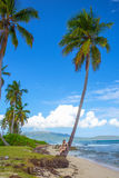 Young girl under palm tree. Young girl sitting under the high palm tree. Tropical landscape, caribbean view Stock Photos
