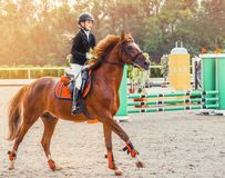 Young girl in uniform jumping with sorrel horse. Blond pretty little girl going jump a hurdle in a competition. Girl with red horse during equestrian Stock Photos