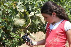 Young Girl in Vineyard Royalty Free Stock Photography