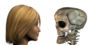Young girl vs old skull isolated on a white Stock Image