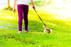 Young girl is on walk with small dog. On grass. Sunlight in the view Stock Photo