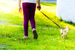 Young girl is on walk with small dog Royalty Free Stock Images