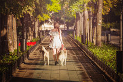 Young girl walking down the street with two dogs. Stock Photography