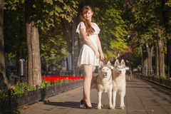 Young girl walking down the street with two dogs. Stock Photos