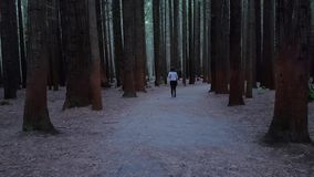 Young girl walking and exploring dark red wood forest. stock footage