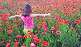 Young girl walking into field of poppies. A young girl walking into field of poppies Royalty Free Stock Photography