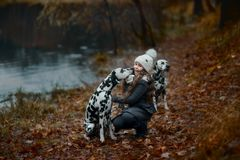 Young girl portrait with her Dalmatian dogs stock image