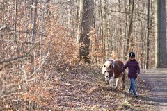 Girl walking with a horse. Young girl walking with her pony in a forest Royalty Free Stock Photography