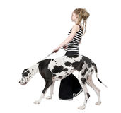 Young girl walking his dog (Great dane 4 years) ha Royalty Free Stock Photos