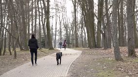A young girl is walking in the park in the spring with a black dog stock video footage