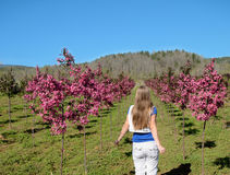 Young girl walking through path of blooming trees. Royalty Free Stock Images
