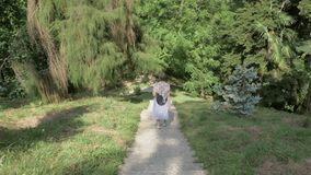 Young girl walking in tropical botanical garden. Batumi, Georgia.  stock video