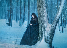 Young girl walking in winter forest royalty free stock images
