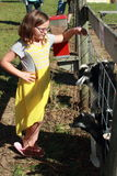 Young girl watching goats Stock Images