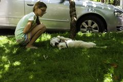 Young girl watching two white puppies playing on green grass in an outdoor park stock photo