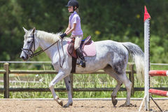 Young Girl White Horse  Stock Image