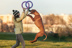 Young girl in yellow coat playing with the jumping dog ridgeback and pullers in autumn time Royalty Free Stock Image