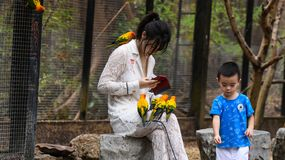 Young girls with small yellow parrot birds royalty free stock photography