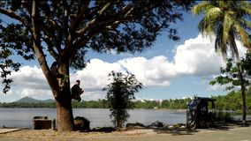 Young girls stay on tree branches along lake shore. San Pablo City, Laguna, Philippines - July 12,2017: Young girls stay on tree branches along lake shore during stock video footage