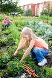 Young girls working in vegetable garden Stock Photos
