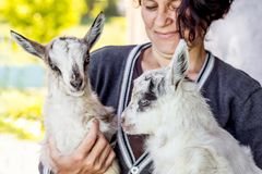Young goatling on the hands of a woman. A woman shows love for p royalty free stock photo