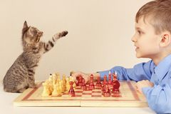 Young grandmaster with playful kitten plays chess. Royalty Free Stock Photo