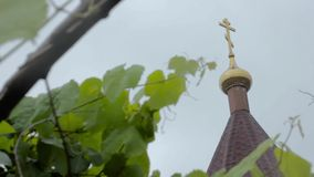 Young grape vine green leaves in the wind on a rainy day and church dome on a background stock footage