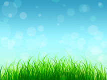 Young grass and blue sky. Background. Spring. Summer. Card. Royalty Free Stock Photo