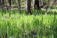 Young grass in the forest Stock Photos