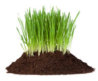 Young grass growing in a pile of soil Royalty Free Stock Photos