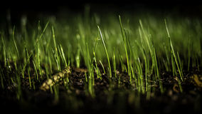 Young grass growing Stock Photo