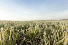 Young grass plants, close-up Royalty Free Stock Photos