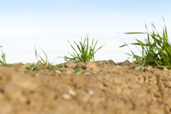Young grass plants, close-up Stock Photography