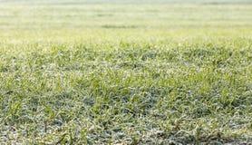 Young grass plants, close-up Stock Photos