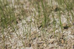 Young grass and soil Stock Images