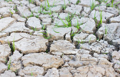 Young Grass Sprout in Cracked Mud. Royalty Free Stock Photos