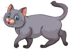Young gray kitten on white Royalty Free Stock Photos