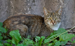 ordinary cat royalty free stock images