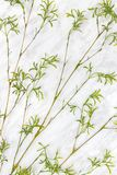 Young green bamboo branches on marble background. Young green bamboo branches with young green leaves, on marble background Royalty Free Stock Photos