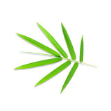 Young green bamboo leaves Stock Photography