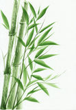 Young green bamboo Stock Image